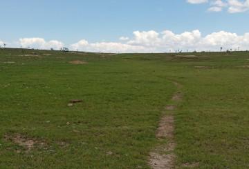 Restableciendo la integridad de los pastizales del Sur del Desierto Chihuahuense post thumbnail
